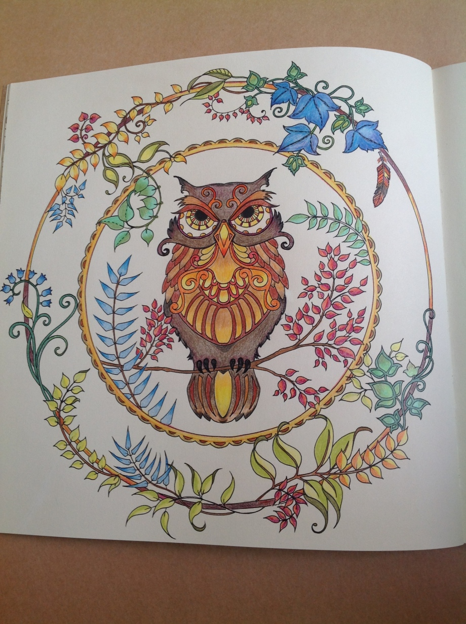 coloured owl