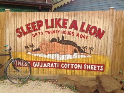 lion-sleeping